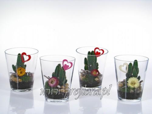 donia kakt Walentynkowa kompozycje kwiatowe Proflora