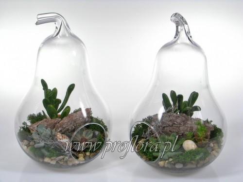 ikebana gruszka duża sukulent - Proflora